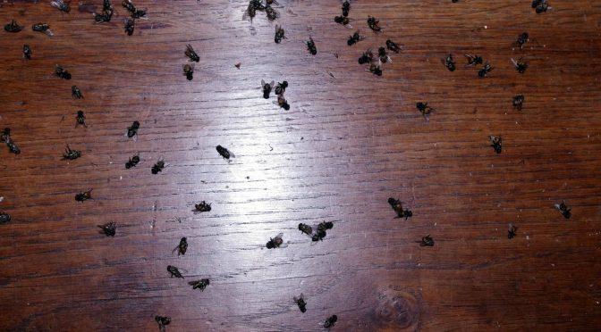 Du balai, les mouches !