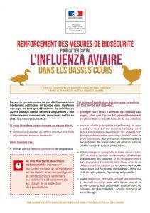 grippa-aviaire