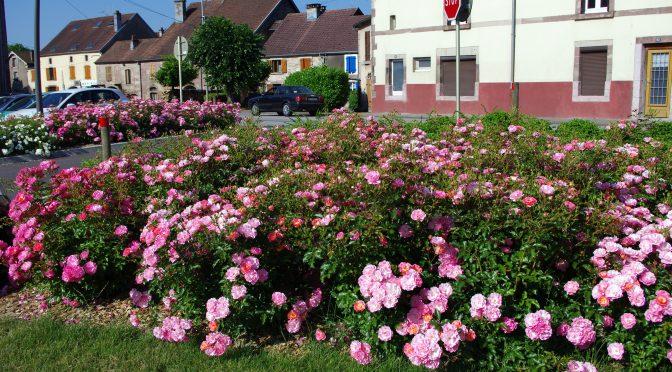 Maisons fleuries 2017